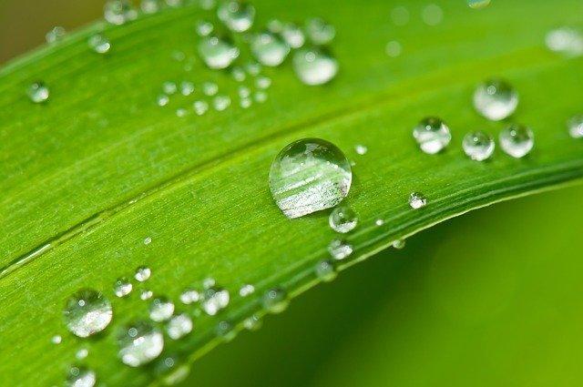 agua purificada en hoja
